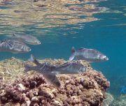 Especies marinas en la Isla de Tabarca
